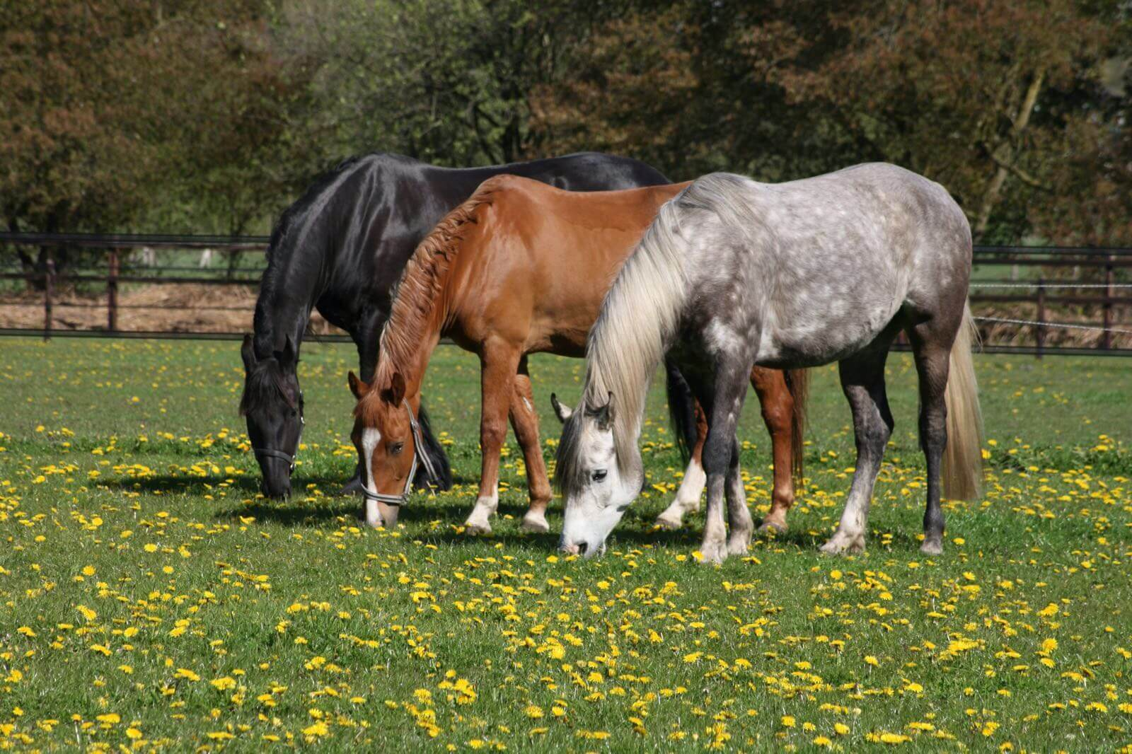Vakantie met paard op de Veluwe